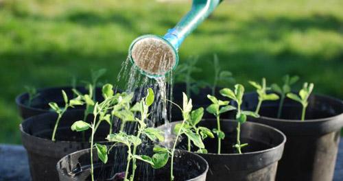 Nhu cầu nước của mỗi loại cây khác nhau